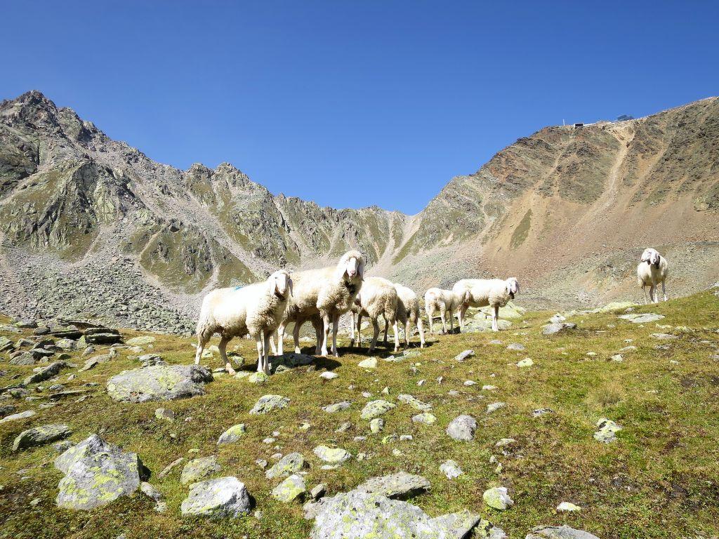 Ferienwohnung Nadine (SOE407) (109836), Sölden (AT), Ötztal, Tirol, Österreich, Bild 14