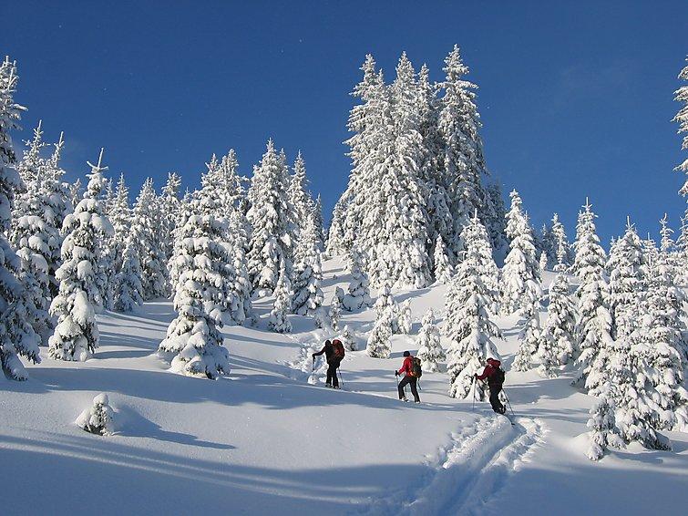 Holidays Styria