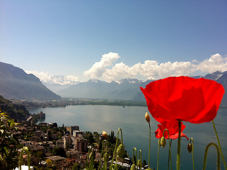 met je hond naar dit vakantiehuis in Montreux