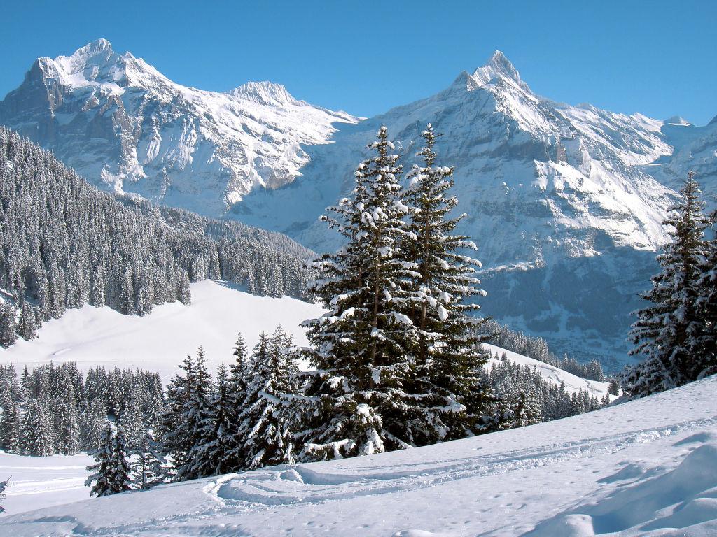 Ferienwohnung Wychel (106824), Grindelwald, Jungfrauregion, Berner Oberland, Schweiz, Bild 38