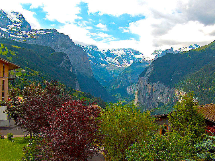Rose in Wengen - Berner Oberland, Zwitserland foto 927397