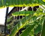 Bild 21 Aussenansicht - Ferienhaus Passera, Monteggio