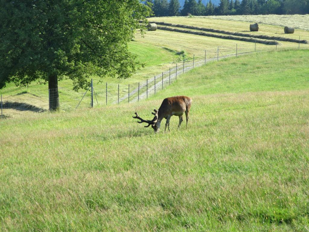 Ferienwohnung Ferienhof Wolf (VIE110) (696720), Viechtach, Bayerischer Wald, Bayern, Deutschland, Bild 9