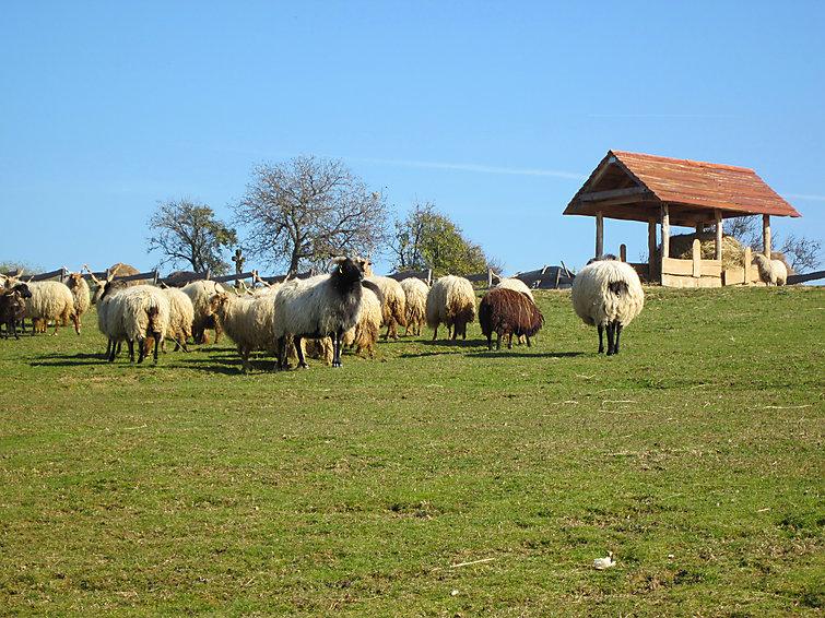Ranch - 10