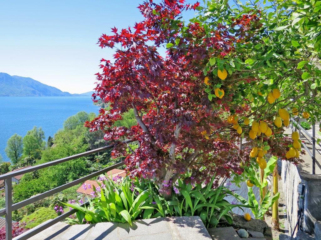 Ferienwohnung della Nonna (CNR120) (108753), Cannero Riviera, Lago Maggiore (IT), Piemont, Italien, Bild 4