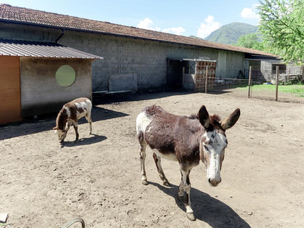 Ferienwohnung Les Maisons della Fattoria 1 (ORA201) (2644795), Omegna, Ortasee, Piemont, Italien, Bild 18