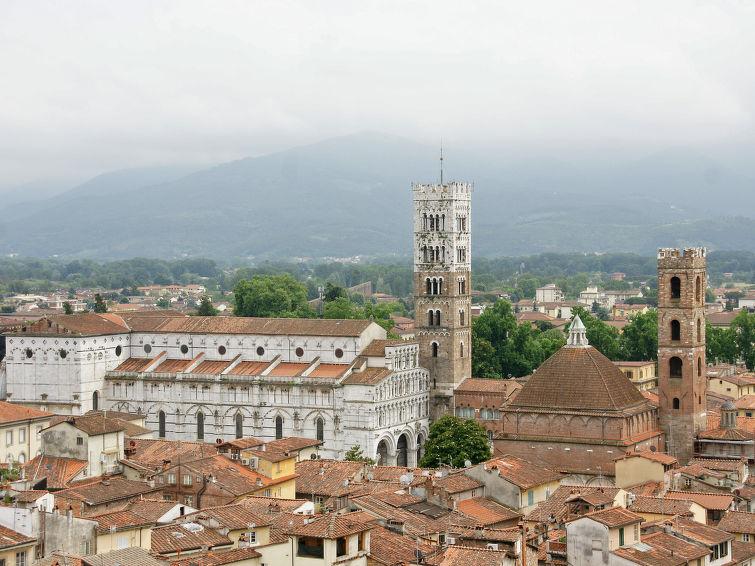 Photo of Campodori (LUU112)