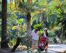 Bild 10 Aussenansicht - Ferienhaus Rosselba, Elba Portoferraio
