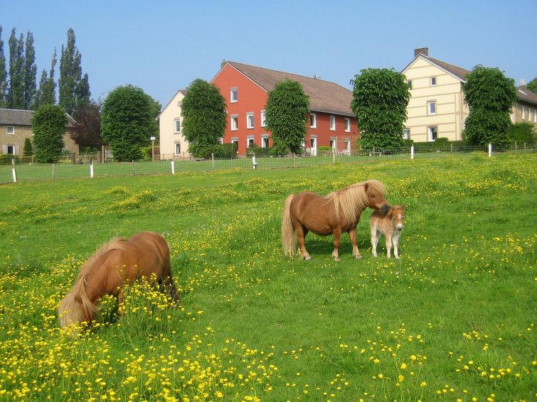 Bungalowpark Landsrade - 6