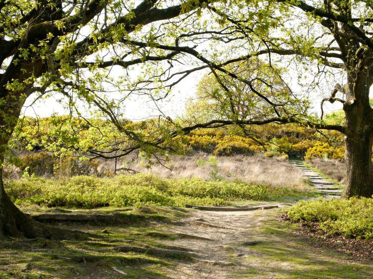 Bosrijk Ruighenrode - 9