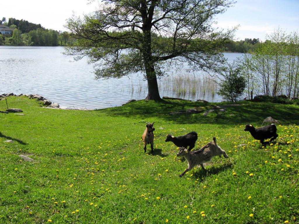Ferienhaus Rönninge by (STH280) (2648557), Täby, Region Stockholm, Mittelschweden, Schweden, Bild 10