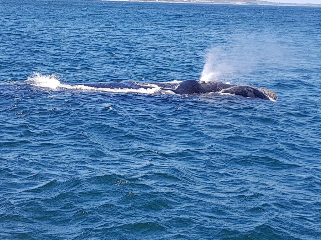 Ferienwohnung Royal Whale Watching Ferienwohnung in Afrika