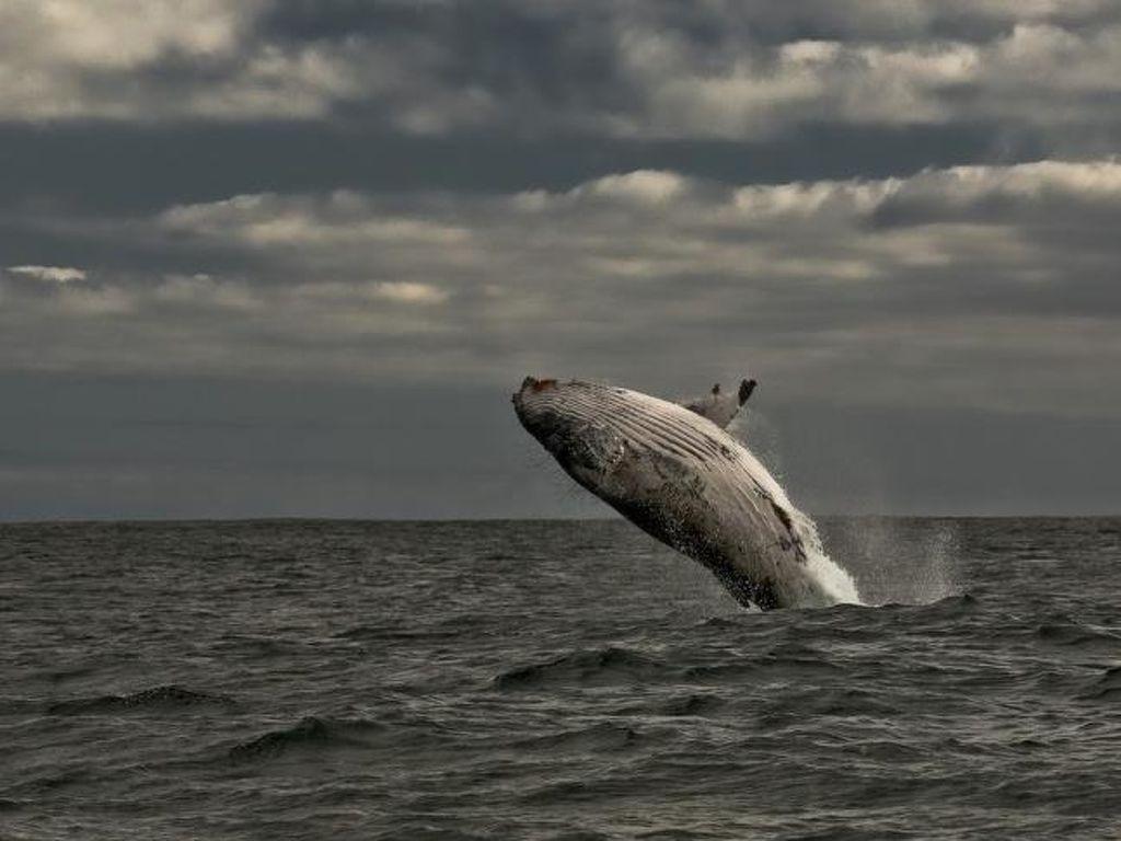 Ferienwohnung Royal Whale Watching